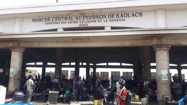 Visite au marché au poisson de Kaolack : Les nombreuses doléances qui attendent le ministre Alioune Ndoye.