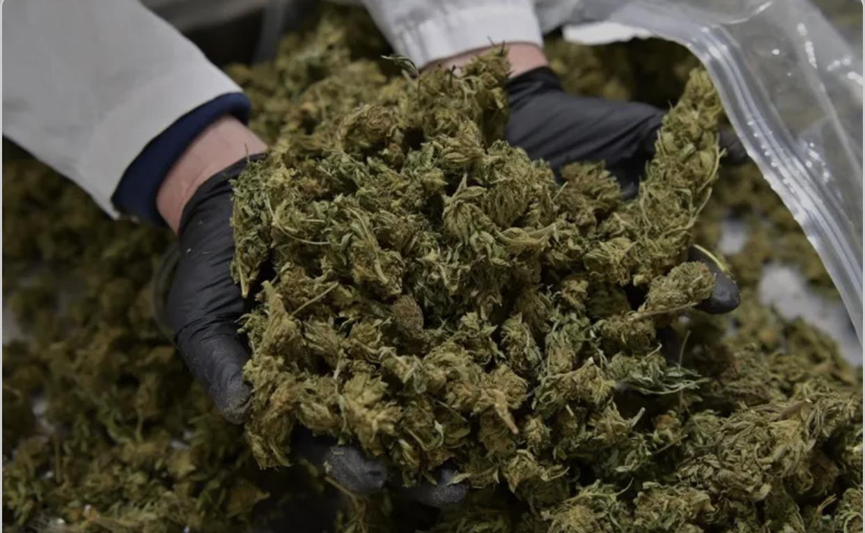 Plus de 20 tonnes saisies entre mars et mai 2021: l'Afrique de l'Ouest ivre de résine de cannabis.