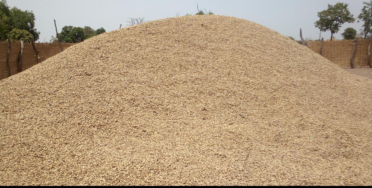 Préparatifs hivernage à Kolda : Mise en place des intrants, désherbage, entretien du matériel agricole…