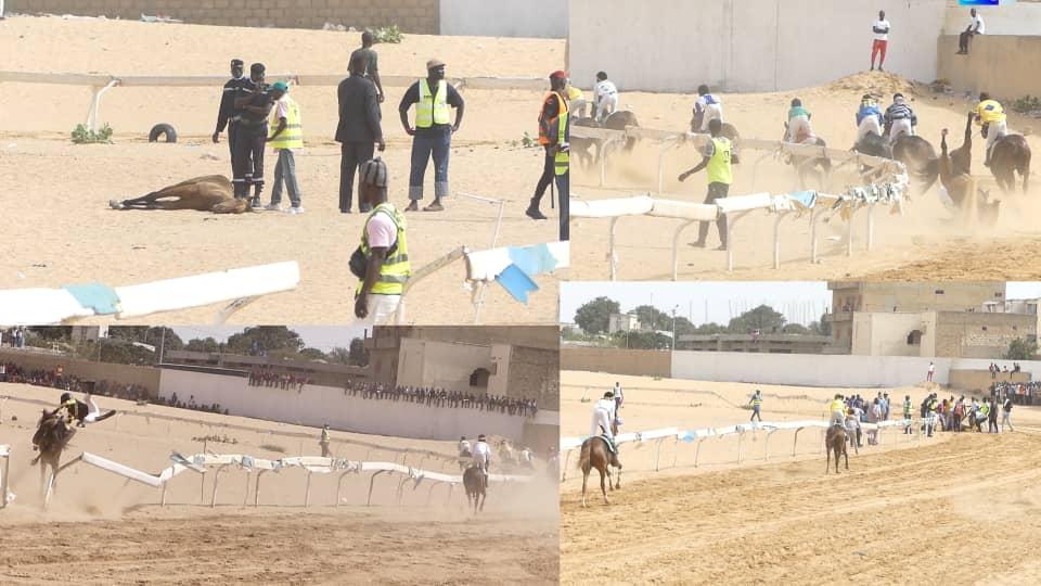 Thiès / Hippisme : Décès cette saison d'une vingtaine de chevaux de courses dont cinq grands champions.