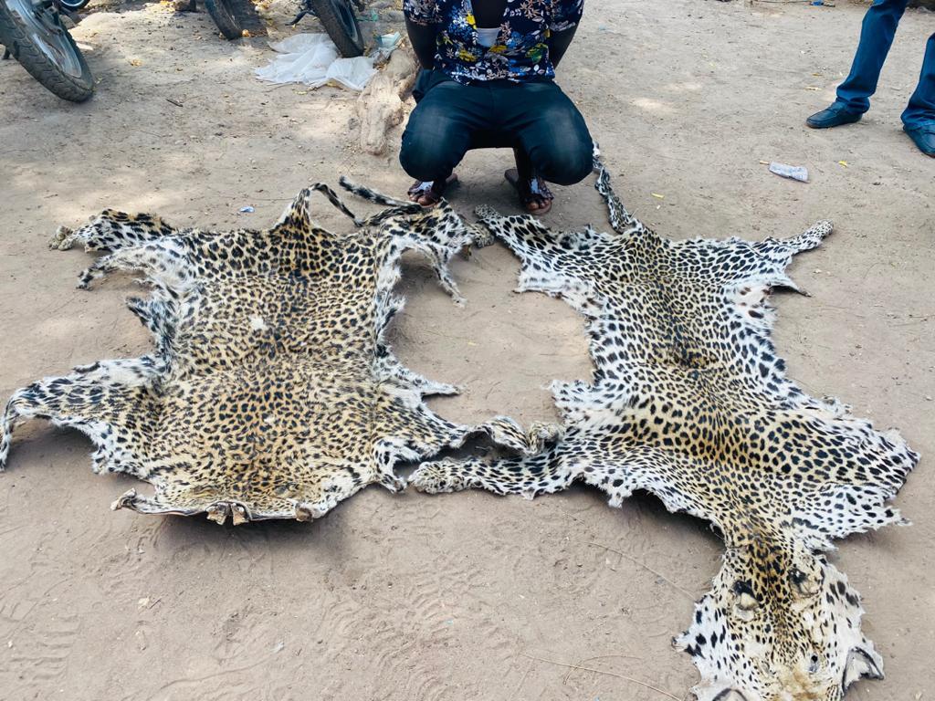 Sénégal Oriental : Traque des trafiquants de peaux de léopard, un chauffeur d'origine étrangère, appréhendé...