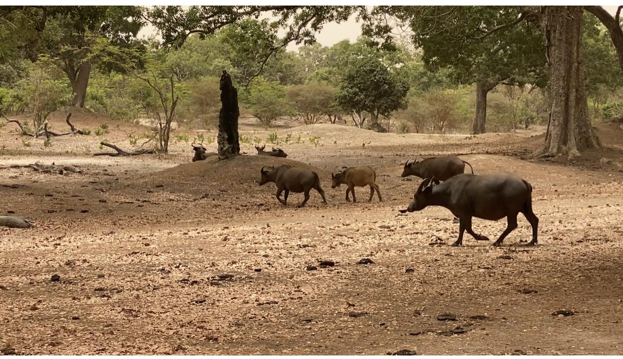 Visite : Le ministre de l'Environnement et ses équipes à la découverte des animaux sauvages de Fathala...