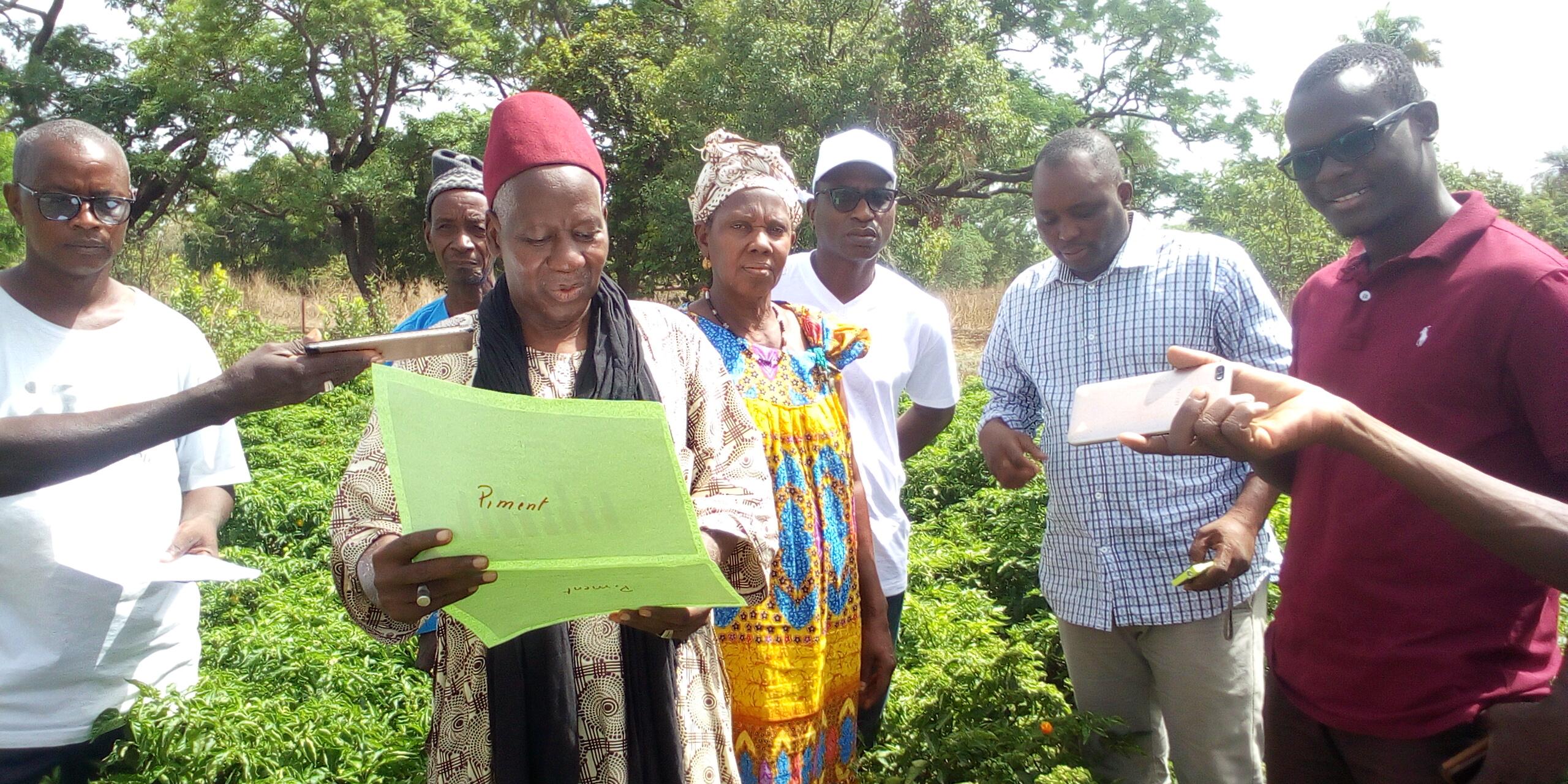 Lutte contre l'insécurité alimentaire et la pauvreté à Kolda :  de nouvelles techniques culturales expérimentées au périmètre maraîcher de Saré Demba Sy.