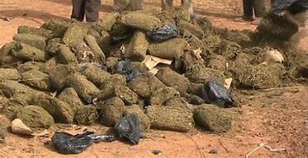 Mboro : Saisie de 1,5 kilogramme de chanvre indien au quartier Ngaye-Ngaye