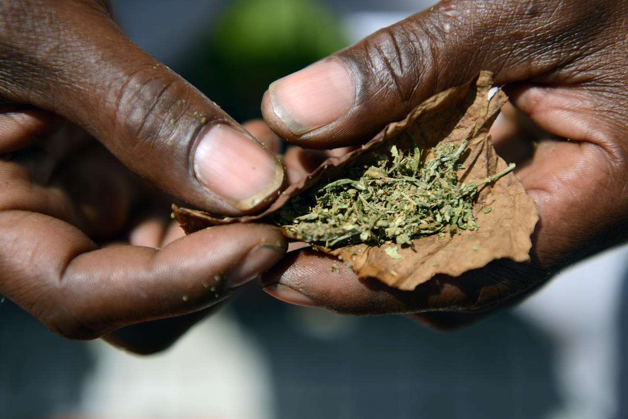 Consommation du cannabis et des opioïdes en Afrique : l'état des lieux très préoccupant de l'ONUDC.