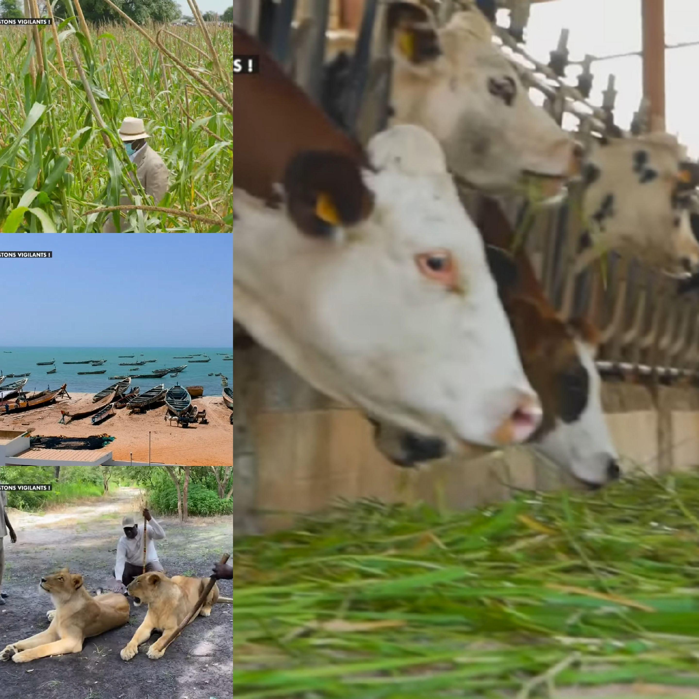 L'agriculture, l'élevage et la pêche : Des secteurs prioritaires du président Macky Sall pour tendre vers une souveraineté alimentaire