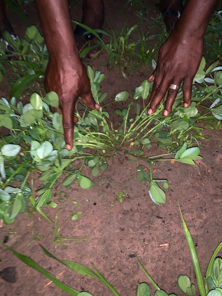 Hivernage à Kolda : Brahim Mamadou Ba (DRDR) « …Nous avons connu un hivernage en dents de scie…d'impact négatif sur le développement végétatif des cultures… »