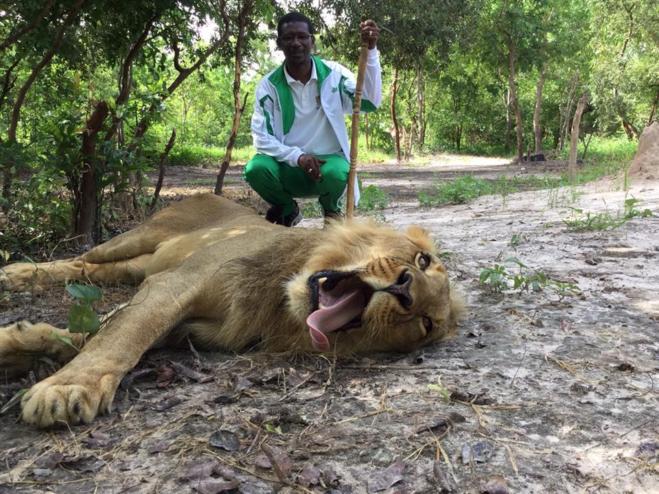 Quand le ministre de l'enseignement supérieur et de la recherche Pr Mary Teuw Niane se promène avec des lions