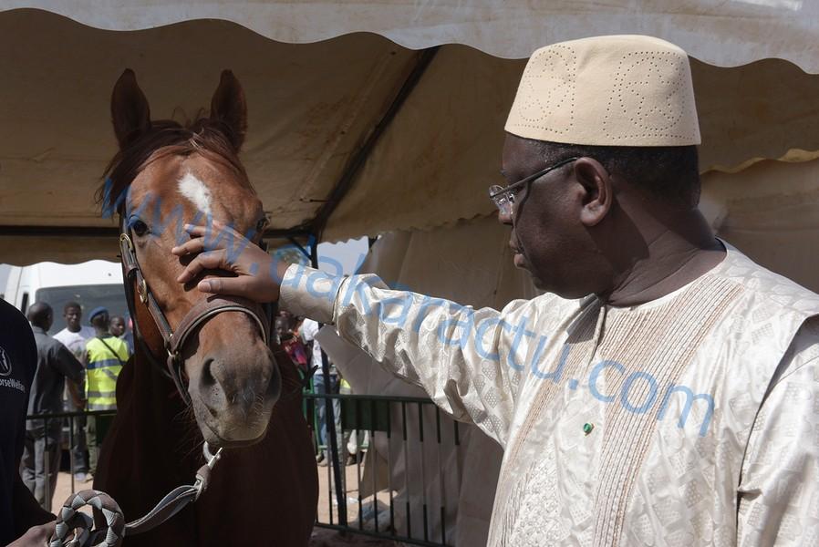 Journée de l'élevage à Koungheul : Le président Macky Sall appréciant un cheval