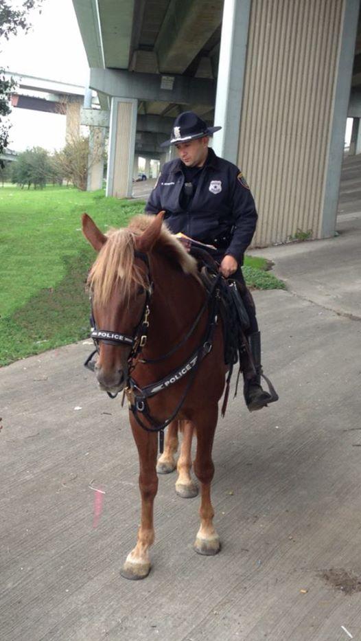 Le dernier adieu poignant d'un policier à sa monture