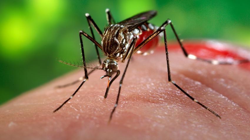 Zika est arrivé en Afrique du Sud