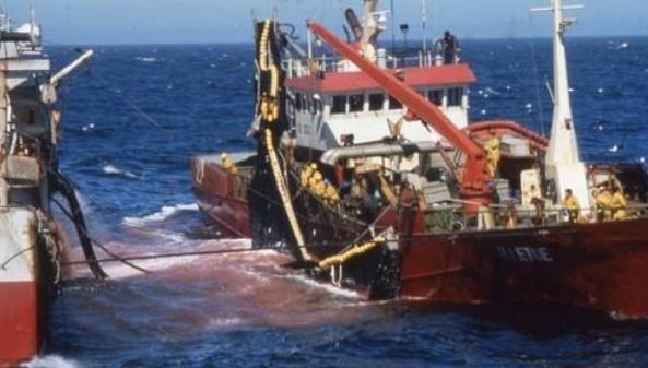 Des accords de pêche qui spolient la mer et le budget de l`Etat (par Abdoulaye Diop)