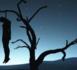 LOUGA / Un homme âgé d'une trentaine d'années pendu à un arbre