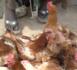 Korité : Quand le poulet se fait désirer au marché Tilène