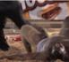 LUTTE : Ameth Dème terrasse Bruce Lee