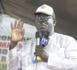 Présidentielle 2019 / Saint-Louis : Démonstration de force des socialistes sous l'impulsion  du Docteur Ahmadou Dia