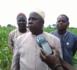 Moussa Sabaly, président de la fédération des cotonculteurs du Sénégal et de l'Afrique de l'Ouest : « Les vrais agriculteurs ne se plaignent pas… »