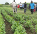 Entrepreneuriat : Une quarantaine de jeunes Ouest Africains seront outillés dans les pratiques agricoles à partir du lundi