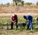 Kaolack : les techniciens de l'agriculture décrètent à partir d'aujourd'hui un mot d'ordre de grève de 72 heures renouvelables