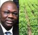 90 ha de Sindia / Meïssa Ngom : « J'ai assez souffert sur ça et je n'ai spolié personne… J'ai un voisin assis sur 110 ha et qui n'a aucun papier et pourtant… »