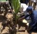 Campagne de reboisement national : 699 arbres plantés à Tivaouane et Ndiassane par Abdou Karim Sall.