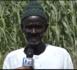 Ndengler : «Nous sommes satisfaits du Président Macky Sall... Nous continuons à réclamer nos terres... Nous cultivons pour vivre» (Abdoulaye Dionne)