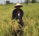 Chérif Léheib Aïdara, président de l'Union des forces agricoles de Kolda : « La révolution agraire est enclenchée... Nous voulons assurer l'indépendance au monde rural… »