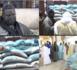 TOUBA - Touba Ca Kanam et Muqadimatul Khidma reçoivent des soutiens de El Hadj Abdoulaye Dia.