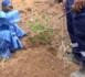 Dangote Cement Senegal participe à la préservation de l'environnement en plantant 5.000 arbres à Ngomène