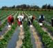 LOUGA/LA REALISATION DES FERMES AGRICOLES PAR LE PASA-LOU-MA-KAF EST UNE AUBAINE POUR LES POPULATIONS DES LOCALITÉS BÉNÉFICIAIRES
