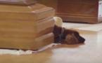 Séisme en Italie : Ce chien refuse de quitter le cercueil de son maître
