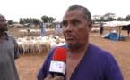 Moutons de Tabaski: Les bergers mauritaniens demandent protection contre les voleurs de bétail.