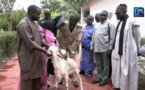 Lancement de la campagne de vaccination du bétail : Thiès se fixe un objectif de plus de 90%