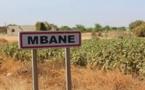 Saint-Louis / Commune de MBANE : Des camaris rongeurs attaquent les cultures.