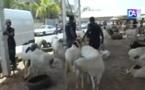 Tabaski :  Zahra Iyane Thiam offre des moutons aux Imams des quartiers de la Sicap