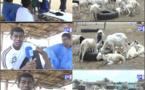 Lendemain de Tabaski : Entre moutons invendus et manque de sécurité, les vendeurs dans le désarroi…