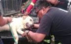Ce chien a donné sa propre vie pour en sauver sept autres !