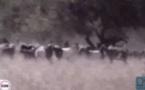 Salif Sow, un berger sourd -muet retrouvé mort à Bakel
