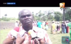 Les producteurs de riz de la région de Sédhiou veulent augmenter leur production
