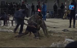 Journée Djibson Prod : Bulldozer renverse Brise de Mer à Iba mar Diop...