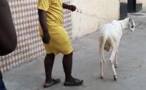 Tabaski 2020 aux HLM : Cheikh Mbaye «Sa Deug Deug» au chevet des populations.