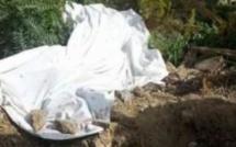 Drame à Keur Assane / Tivaouane : Un septuagénaire retrouvé égorger dans un champ
