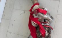 JOAL : Mysticisme à la mairie... Le coup de fil de Mahmoud Saleh...